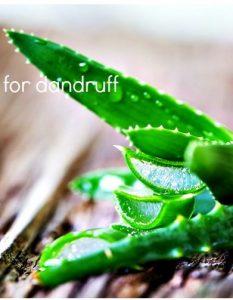 How To Use Aloe Vera For Dandruff - 16 Methods